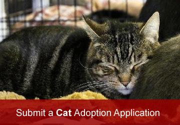 Cat Adoption Application
