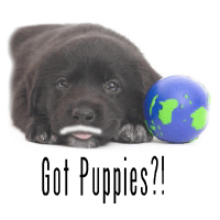 Got Puppies?! Adoption Program